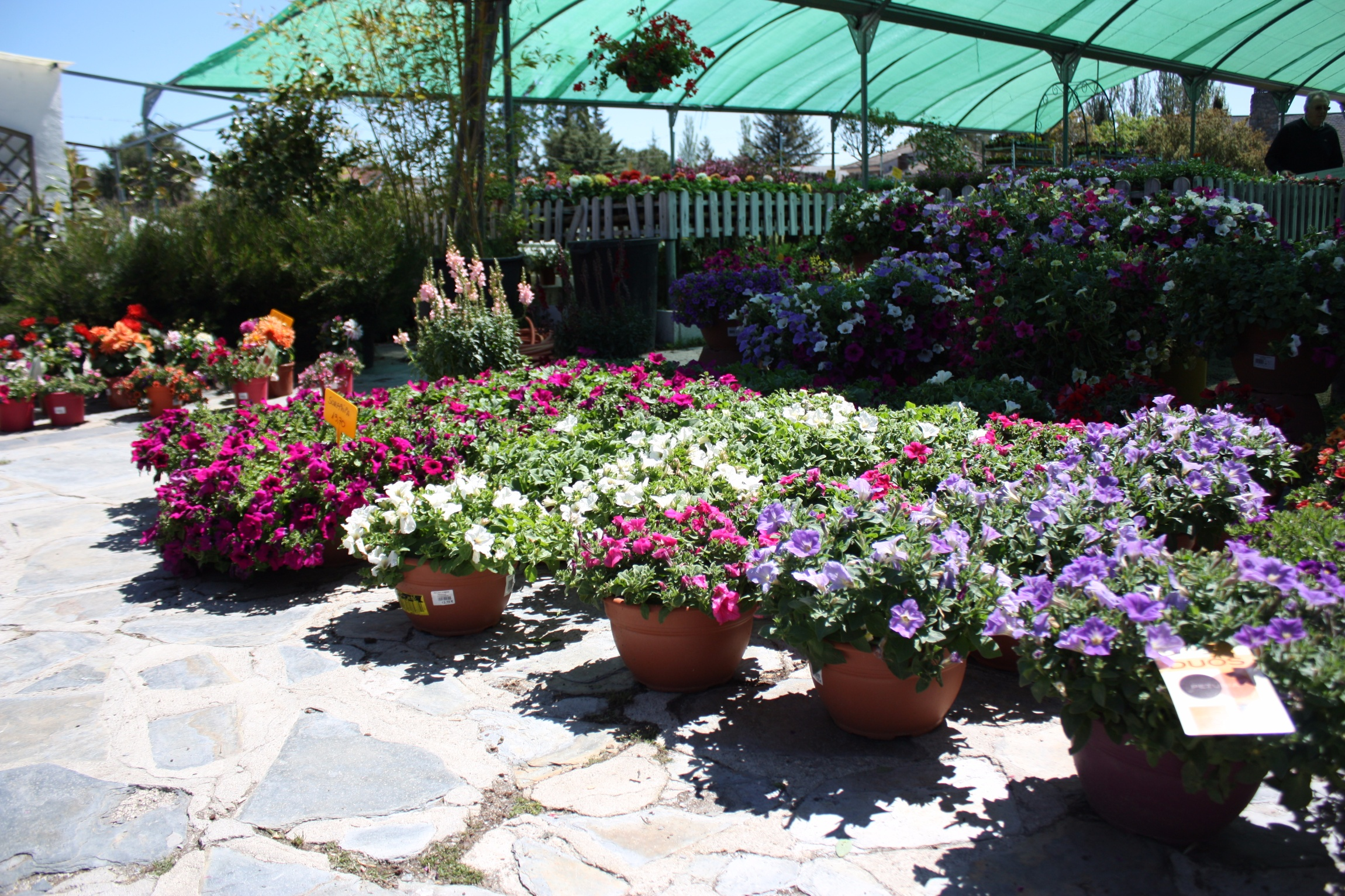 Los juncos s l centro de jardiner a en cerceda madrid - Jardineria colmenar viejo ...